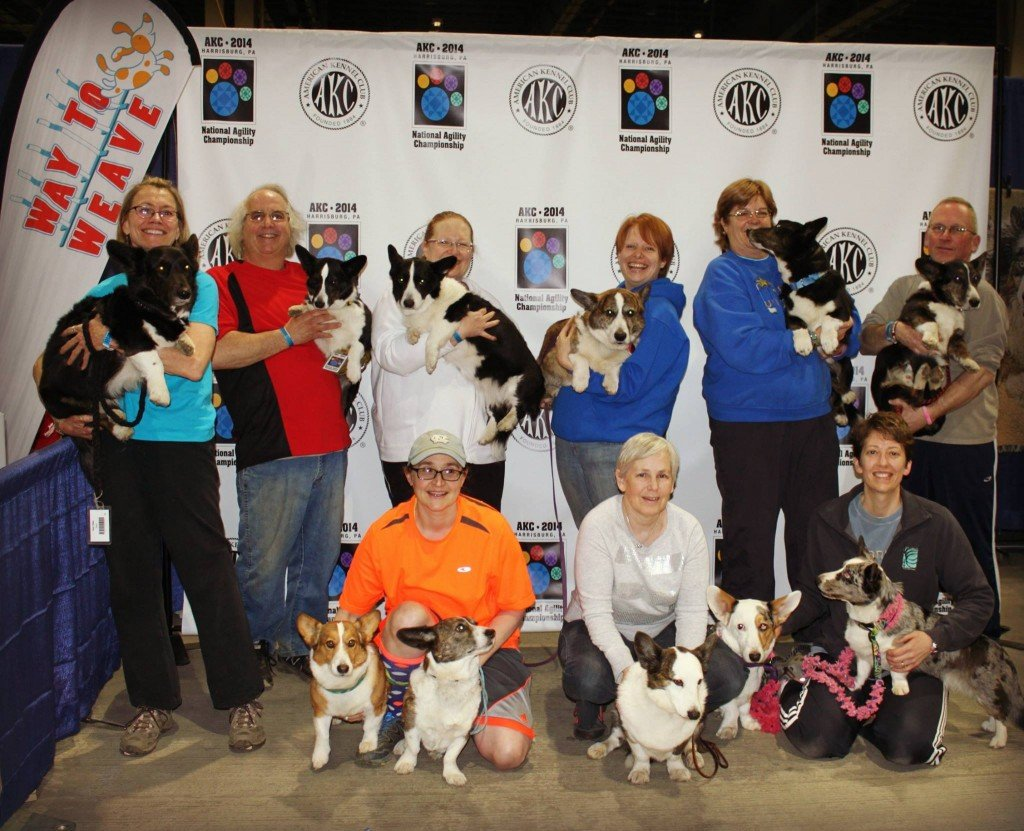 AKC National Agility/Obedience/Rally Championship